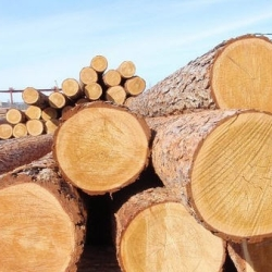 Logs (sawlog)