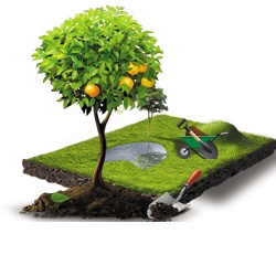 Landscaping, gardening and landscaping
