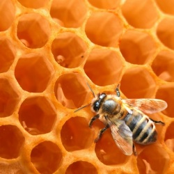 Beekeeping products and raw materials